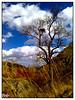 All alone (Mojtaba Jahani) Tags: tree mobile by lady bug landscape phone iran cell taken ایران mashhad گوشی مشهد camrea طرقبه n82 منظره torqabeh noedited