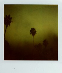 Palm trees at night (~KIM~) Tags: trees night polaroid palm 600 slr680 680 polaroidweek2009