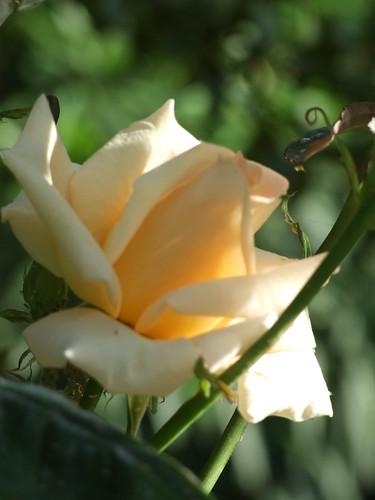 fiori 060