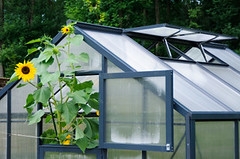 How to Build a Greenhouse Plans