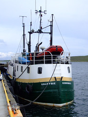 "Valkirie Kirkwall (nz_willowherb) Tags: boats see boat flickr tour harbour vessel visit shetland lerwick kirkwall diveboat valkirie to"" ""go visitshetland seeshetland goptoshetland visitlerwick gotolerwick seelerwick"