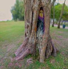 Burka Woman Tree (j . f o o j) Tags: park panorama beach 50mm hawaii nikon d70 oahu method kailua f12 brenizer bokehrama plafi burkawomantree