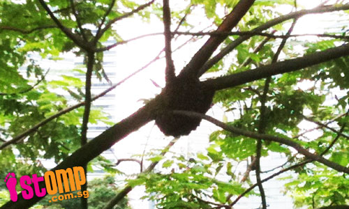 Beehive spotted on tree outside Suntec City