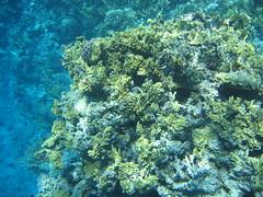 136_3643 (LarsVerket) Tags: egypt snorkling fisk undervannsfoto