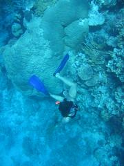 136_3649 (LarsVerket) Tags: egypt snorkling fisk undervannsfoto