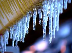 Oh baby but it's cold outside... (ale_baco82) Tags: blue winter light cold ice colors composition blu di campo inverno colori freddo luce comp ghiaccio naturalmente ghiaccioli profondit dpf colorphotoaward