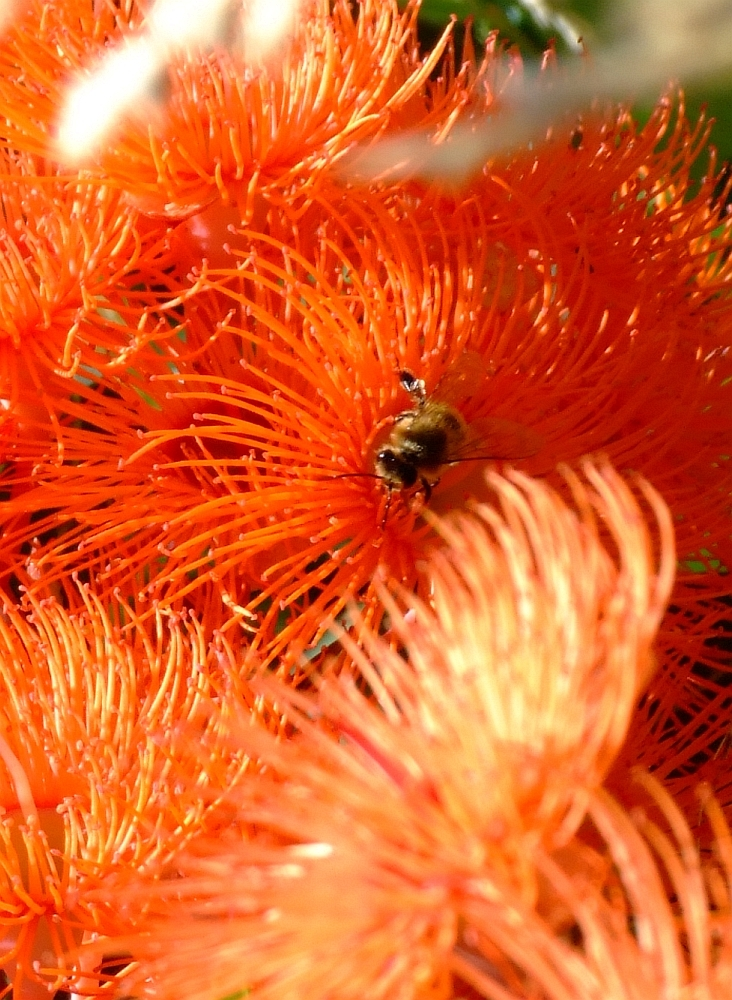 bee-in-orange