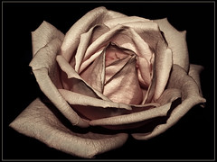 You Must be the Change you Want to See in the World. (itala2007) Tags: pink flores flower nature rose flor rosa romance explore rosas seeninexplore theunforgettablepictures itala2007 multimegashot lesamisdupetitprince sensationalphoto themonalisasmile imagesforthelittleprince worldsartgallery