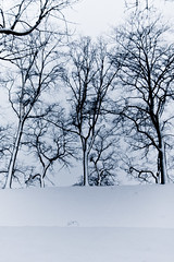 Trees (Joaaso) Tags: city trees winter snow oslo by vinter afternoon blizzard fortress sn lightroom trr snvr akershusfestning ettermiddag canonefs1755mmf28isusm oslosentrum canoneos450d