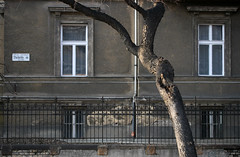 Thkly t (sonofsteppe) Tags: street old city windows winter urban detail building tree brick art horizontal wall architecture fence grey daylight stem mural hungary branch exterior outdoor antique bare budapest nobody explore ornament static series weathered 60mm exploration streetname stucco peeled streetplate wallscape sonofsteppe pusztafia zugl utcatbla streetplatesofbudapest istvnmez thklyt urbanlifeoftrees