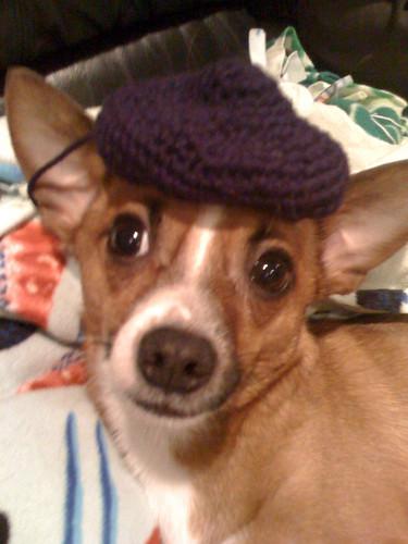 Pepe Le Pup