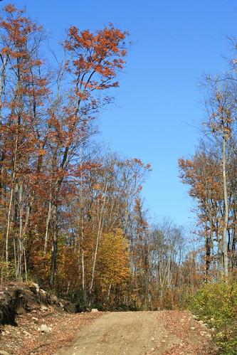 Logging Road between Huntsville and North Bay