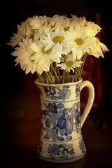 Daisies (DigiDi) Tags: stilllife daisies texturedphoto photoartistry proudshopper atqueartificia