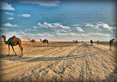 OUR LIFE.... (uis) Tags: sky canon iso100 sand desert s camel f56 guillaume doha qatar fisheyes 10mm 50d 1160 alkubaisi   theebalkubaisi