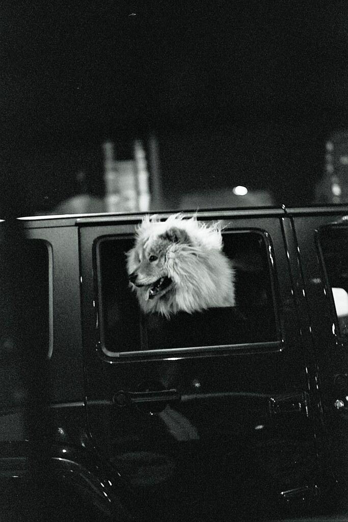 lion/dog