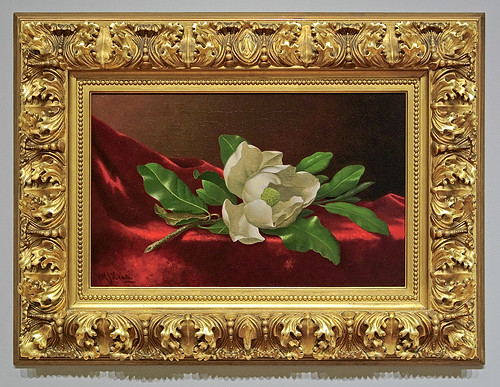"Oil painting, ""Magnolia"", by Martin Johnson Heade, ca. 1885-1895, at the Saint Louis Art Museum, in Saint Louis, Missouri, USA"