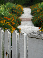 2009 World Wide Photo Walk - Williamsburg, Virginia (footrina) Tags: wood flowers orange plants shells white green nature yellow gardens fence garden path walk walkway worn williamsburg pathway gravel picket worldwidephotowalk