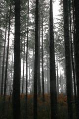 Mount Hebo, Oregon