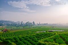 Strawberry farm (T   J ) Tags: indonesia bandung westjava nikkor d300 strawberryfarm ciwidey mywinners abigfave teeje anawesomeshot