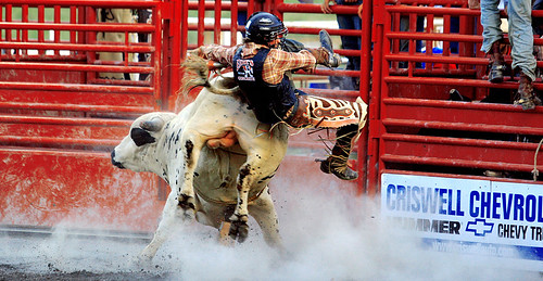 Balls. Bull-riding means the bulls balls are tied up. You would buck off anyone trying to ride your back if your balls or other delicate organs were tied up, wouldnt you?