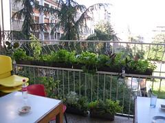 the women balcony of the Autonomous Women Center