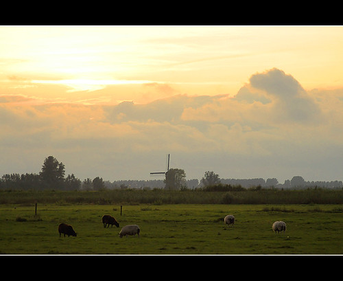 a dutch landscape