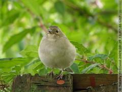 Birds feeding 1/5