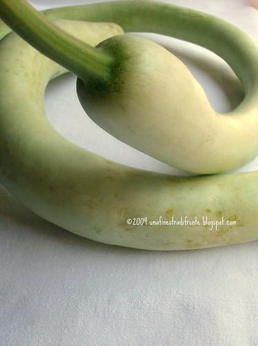 Zucca serpente