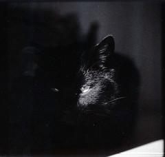 joschi spot (keck_volker) Tags: mamiya cat nude polaroid great best winner 4x5 polaroid600 largeformat selfshot rb67 664 polalove fujifp100c mamiyarb67pro ishootpolaroid