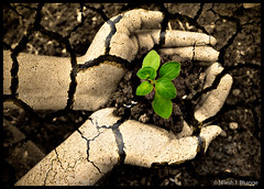 Go Green (bnilesh) Tags: plant black hand soil plantation enviornment gogreen mywinners platinumphoto nakedhands