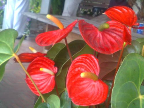 En Caracas, en Jardines Topotepuy, realizaremos el Recorrido Flores y
