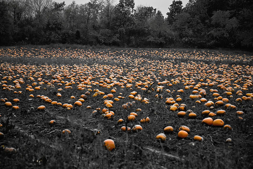 The Great Pumpkin Patch by CJ Schmit