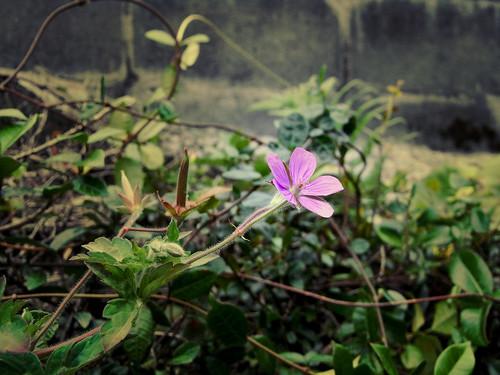 Flower-065
