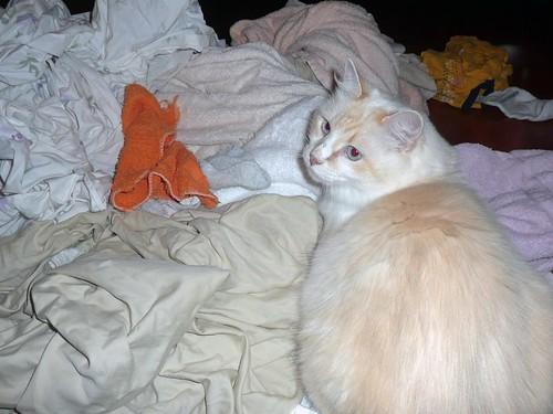 miller laundry
