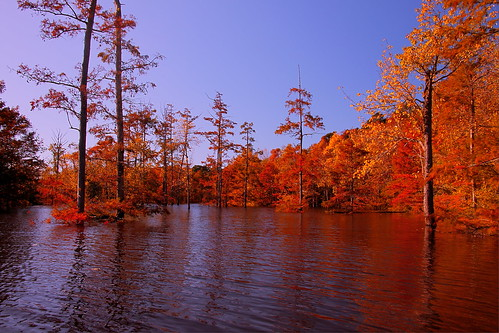 Ouachita River Fall Backwater