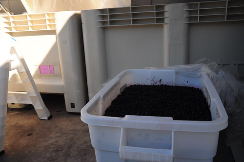 Our wine in the large white vats. Cousin Johns in the tiny bin.