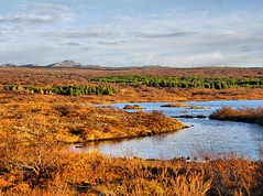 ingvellir haust/ Autumn fall (jaari) Tags: work this is photo amazing flickr good alt picture award it made your sample crown splash really attention seen caught has find img ib splendid worthy deserves addictive awarded width500 height240 a targetblank width200 i height200 byour bthis bithis thisbrilliantphotoislikeashootingstar hrefhttpwwwflickrcomgroupsautumnineurope brilliant photography height208 hrefhttpwwwflickrcomgroups807710n23 hrefhttpwwwflickrcomgroupsdiamondheart titleinvitebywinterblossomonflickrimg srchttpfarm4staticflickrcom31912967613004e9b980c0d4tjpg hrefhttpwwwflickrcomgroupsthedarkknightsimg hrefhttpwwwflickrcomgroupsthenaturalworldofnature srchttpfarm4staticflickrcom26003886899137571511fb5dmjpg width147 hrefhttpwwwflickrcomgroupsthebattleofbritianawardsimg hrefhttpwwwflickrcomgroupsfabulousplanet srchttpfarm3staticflickrcom261039183970730c913ab1afjpg titlefabulousplanetstandardaward srchttpfarm4staticflickrcom252739814120009c5a28f55bjpg