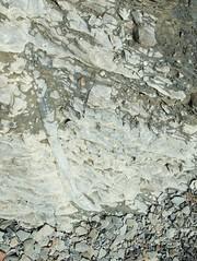 Joggins fossil