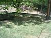 S4026149 (pappgabor) Tags: zoo veszprém 2007