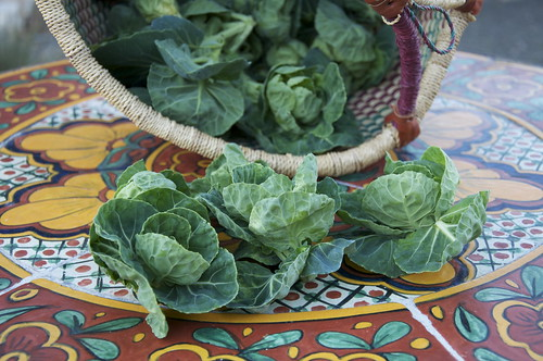 My delinquent Brussels Sprouts that, instead of tight tasty heads, were bitter, blowsy cabbages.