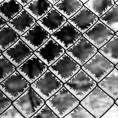 Winter does magic.... (Tobi_2008) Tags: winter bw cold fence tobi schwarzweiss zaun soe reif klte blueribbonwinner supershot mywinners abigfave platinumphoto ysplix theunforgettablepictures bwartaward goldstaraward creattivit artofimages wanderinggypsies flickrcinated