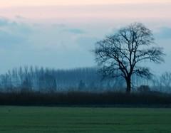 Tiempos borrosos. (Itotti69) Tags: blue trees winter camp sky naturaleza mist nature azul clouds heaven arboles cel natura paisaje arbres cielo nubes campo invierno blau niebla madrugada nuvols hivern boira matinada favorites5