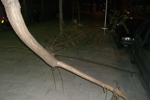 arbol partido rama rota encima de coche esplugues de llobregat