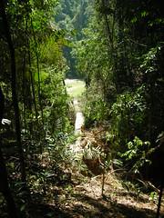 Taman Negara 22 (Ben Beiske) Tags: trees wild trekking walks hiking jungle malaysia tamannegara malaisien