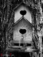 (Rodrigo_paz1984) Tags: bw tree love byn blancoynegro birds hearts arbol blackwhite heart nest amor pajaros nido corazon birdshouse corazones w55 dscw55 casadepajaros sonycibershotdscw55