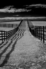 Fence Shadows (dkrobb3) Tags: shadow blackandwhite bw canon fence infrared canon50mm ef18