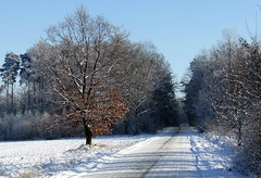Snowy Road (Jacek Magryta) Tags: road winter snow tree forest landscape poland jacek lowersilesia piensk borydolnoslaskie