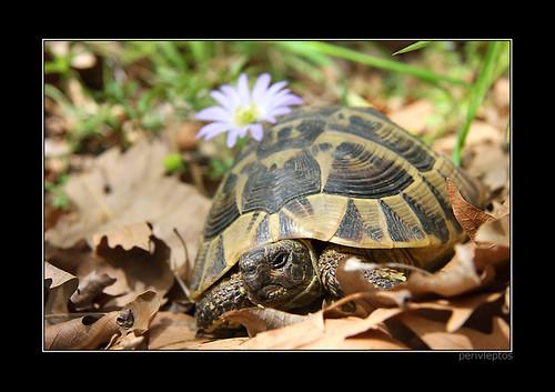Hippie turtle