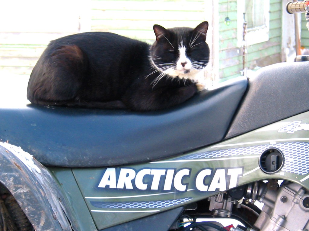 arctic • cat