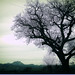 tree image, photo or clip art